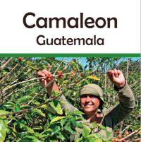 Guatemala Camaleon